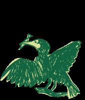 長良川鵜飼の鵜1